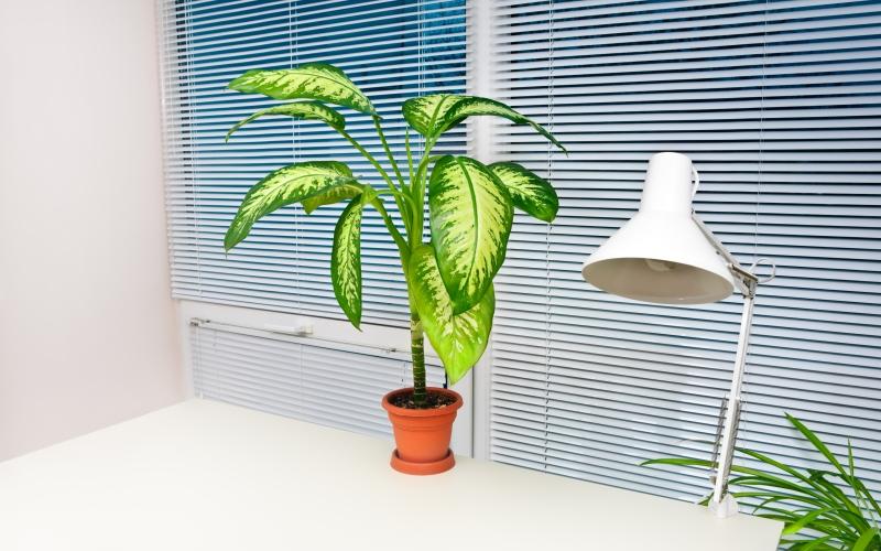 Por qué las plantas en la oficina son beneficiosas: 5 razones